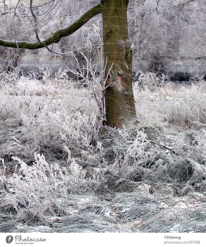 Frostschatten Natur weiß Baum Winter Wiese kalt Schnee Garten Park Eis Leipzig frieren Bahnhof Baumrinde stilllegen