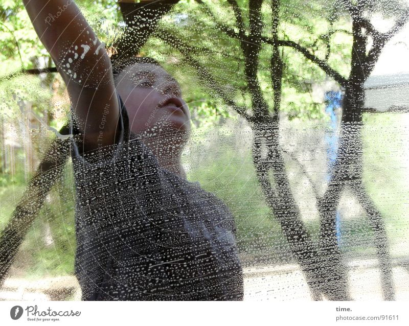 Fleckenreiniger Wasser Baum Glas dreckig Energiewirtschaft Wassertropfen Reinigen Sauberkeit Beruf Dienstleistungsgewerbe Fensterscheibe Sportveranstaltung