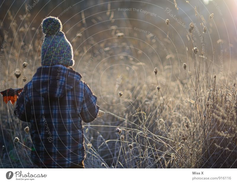 Der Morgen Mensch Kind Blatt Winter kalt Herbst Gefühle Junge Stimmung Eis Wetter Feld Nebel Sträucher Kindheit Frost