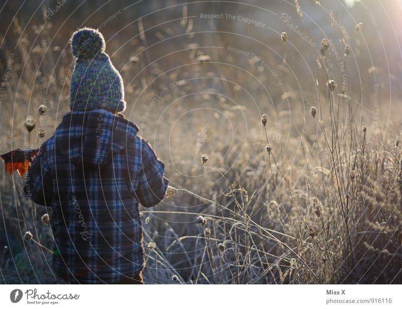 Der Morgen Mensch Kind Kleinkind Junge 1 1-3 Jahre 3-8 Jahre Kindheit Herbst Winter Nebel Eis Frost Sträucher Blatt Feld Mütze kalt Gefühle Stimmung Wetter