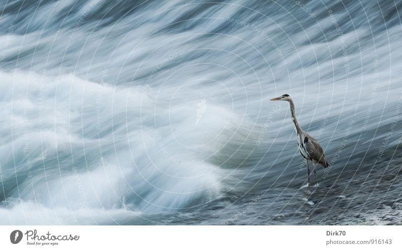 Geduld ist die Tugend des Jägers blau weiß Wasser Einsamkeit Tier schwarz kalt gelb Bewegung Küste grau Zeit Vogel Wellen warten beobachten