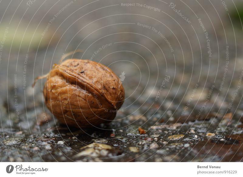 ernte Walnuss Nuss Hülsenfrüchte Pflanze Ernte Herbst fallen liegen Straße Asphalt nass Regen Wetter herbstlich Risiko Hülle Nahaufnahme Außenaufnahme Farbfoto