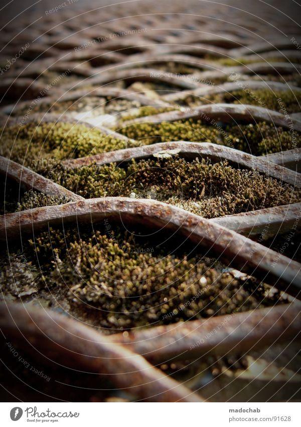 EINZELZELLEN Natur alt Pflanze Metall Zeit Industrie Wachstum Netz Dinge obskur Rost Pilz kämpfen Material Raster Gitter
