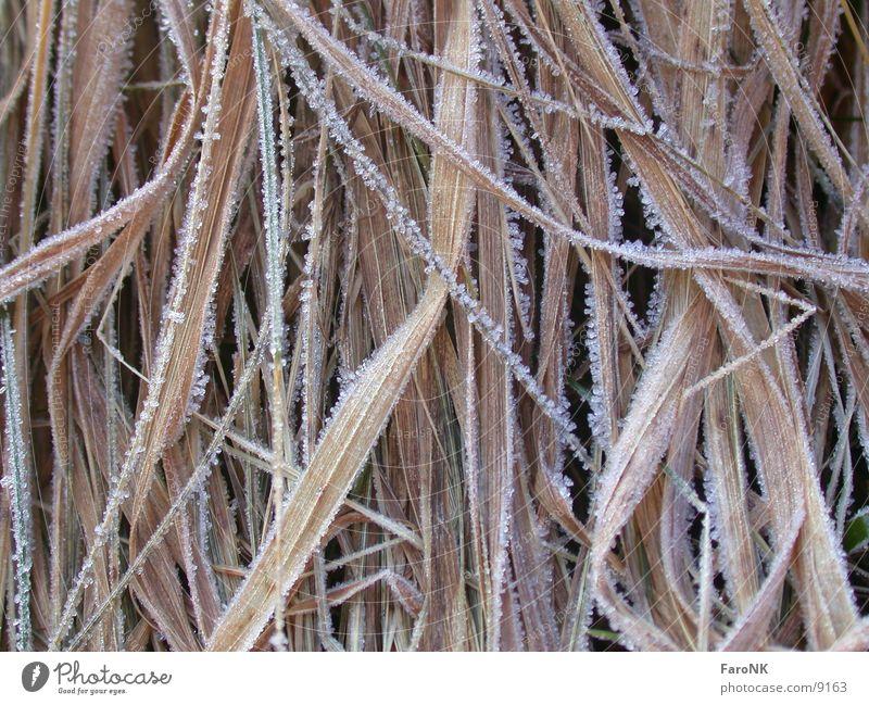 Gräser 2 Gras Eis braun Frost