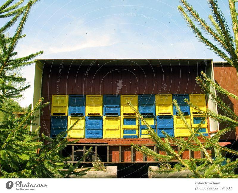 Zu Besuch bei Maja Biene König Insekt stechen Bienenstock Sommer Honig Staubfäden Bienenwaben Tier Baum Tanne Tannenzweig grün gelb braun Wagen Haus Wohnung