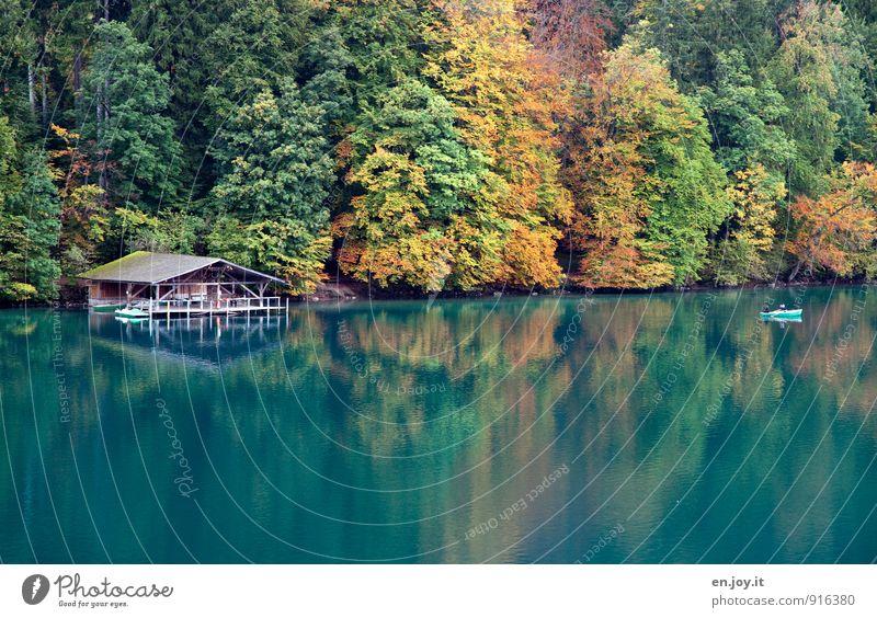Traumherbst Mensch Natur Ferien & Urlaub & Reisen grün Erholung Landschaft ruhig Wald gelb Herbst See Freizeit & Hobby Idylle Tourismus Ausflug Kitsch