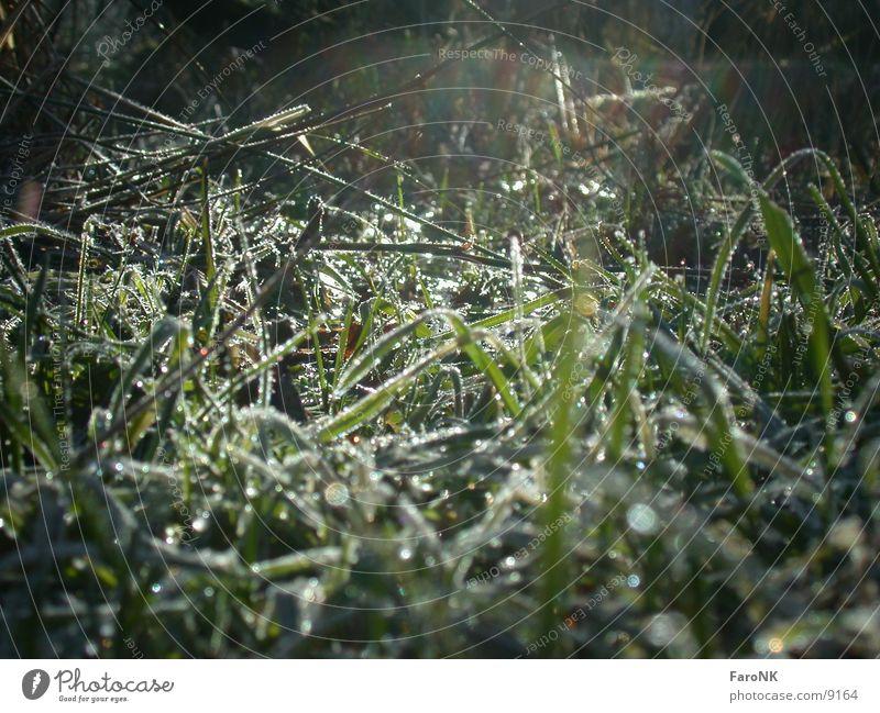 Gräser 1 Sonne grün Wiese Gras