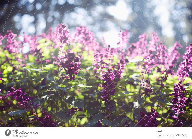 Frühling im Garten Pflanze Sonnenlicht Sommer Schönes Wetter Blume Sträucher Park Blühend grün violett Warmherzigkeit Frühlingsgefühle Frühlingstag
