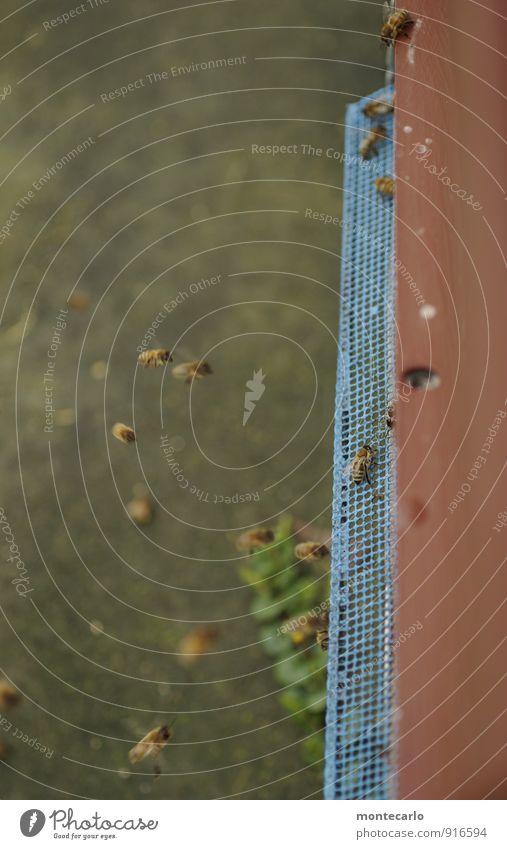 Stockwerk | Stock für die Bienchen Natur blau schön Tier Umwelt natürlich klein fliegen braun Arbeit & Erwerbstätigkeit wild elegant Wildtier authentisch