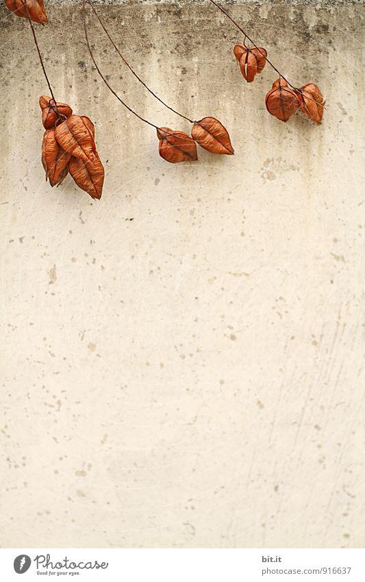 Klagemauer Natur Pflanze Wand Herbst Mauer Partnerschaft Herbstfärbung Herbstbeginn