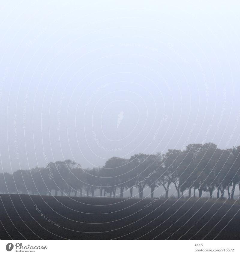 Allez Allee Baum Landschaft Wolken Winter dunkel Wald Straße Herbst Wiese Wege & Pfade grau Feld Nebel Dunst trüb