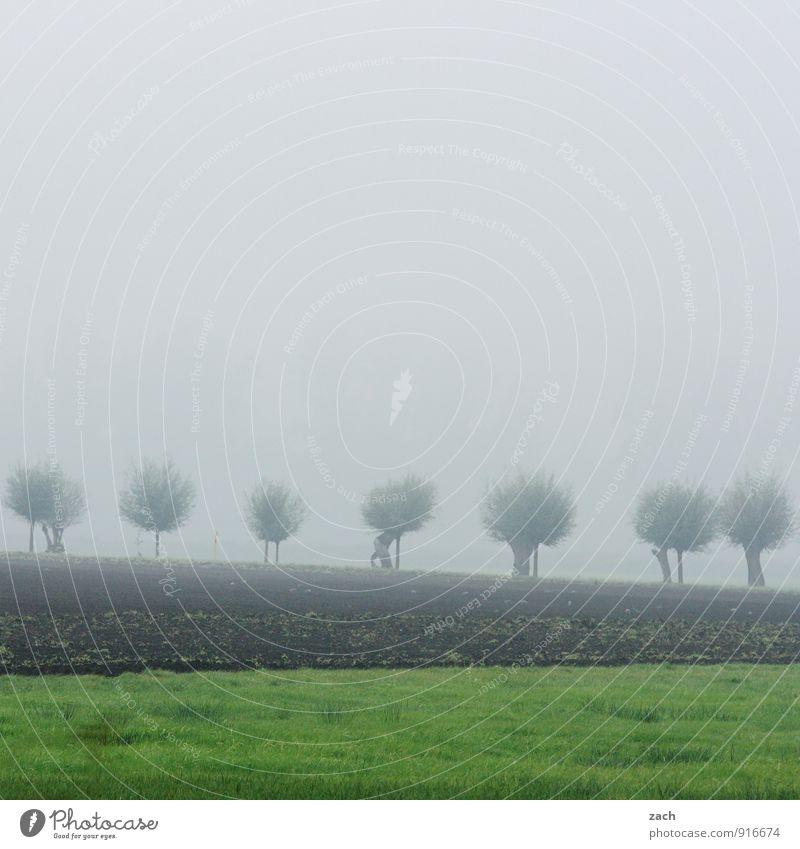Brandenburg, benebelt Natur Landschaft Pflanze Erde Himmel Wolken Herbst schlechtes Wetter Nebel Baum Gras Feld dunkel braun grau grün Traurigkeit