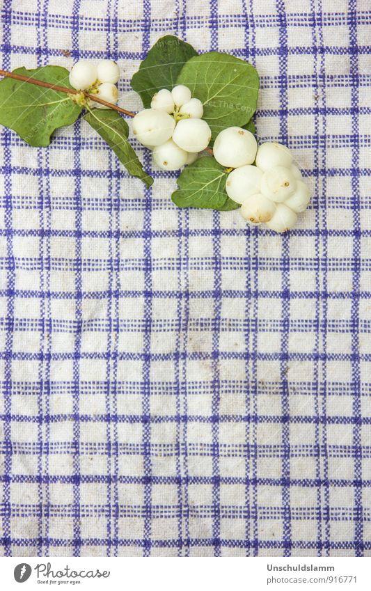 ...es hat aufs Küchentuch geschneit! Lifestyle Häusliches Leben Garten Dekoration & Verzierung Umwelt Natur Pflanze Frühling Sommer Herbst Sträucher Grünpflanze