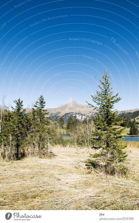 am Lauenensee Natur blau Sommer Erholung Landschaft ruhig Berge u. Gebirge Herbst Gras Freiheit See wandern Ausflug Schönes Wetter Seeufer Alpen