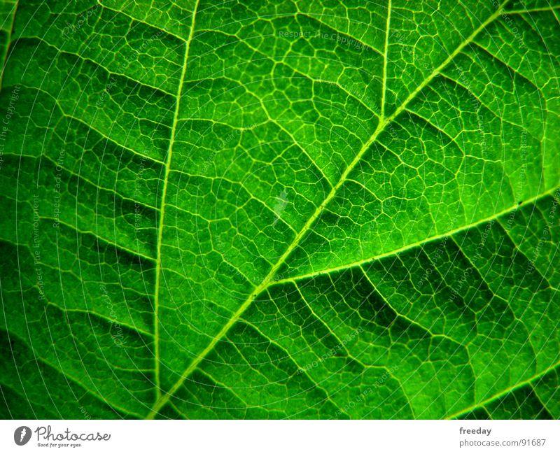 ::: Chlorophyll 2.0 ::: Hintergrundbild Unikat Baum Romantik mehrfarbig nah Photosynthese reif grün Blatt Götter Pflanze hellgrün dreidimensional Gefäße