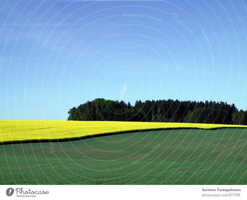 raps_mai_1 Feld Raps Frühling Mai Horizont Physik Ferne groß Wiese Pflanze Landwirtschaft grün gelb Himmel blau verrückt Wärme ruhig Amerika Landschaft Ackerbau