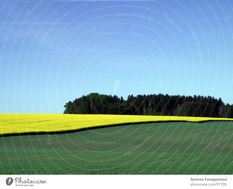 raps_mai_1 Himmel grün blau Pflanze ruhig gelb Ferne Wiese Frühling Wärme Landschaft Feld groß Horizont verrückt Physik