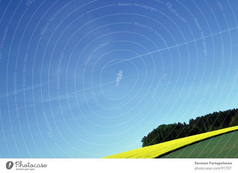 raps_mai_2 Himmel grün blau Pflanze ruhig gelb Ferne Wiese Frühling Wärme Landschaft Feld groß Horizont verrückt Physik