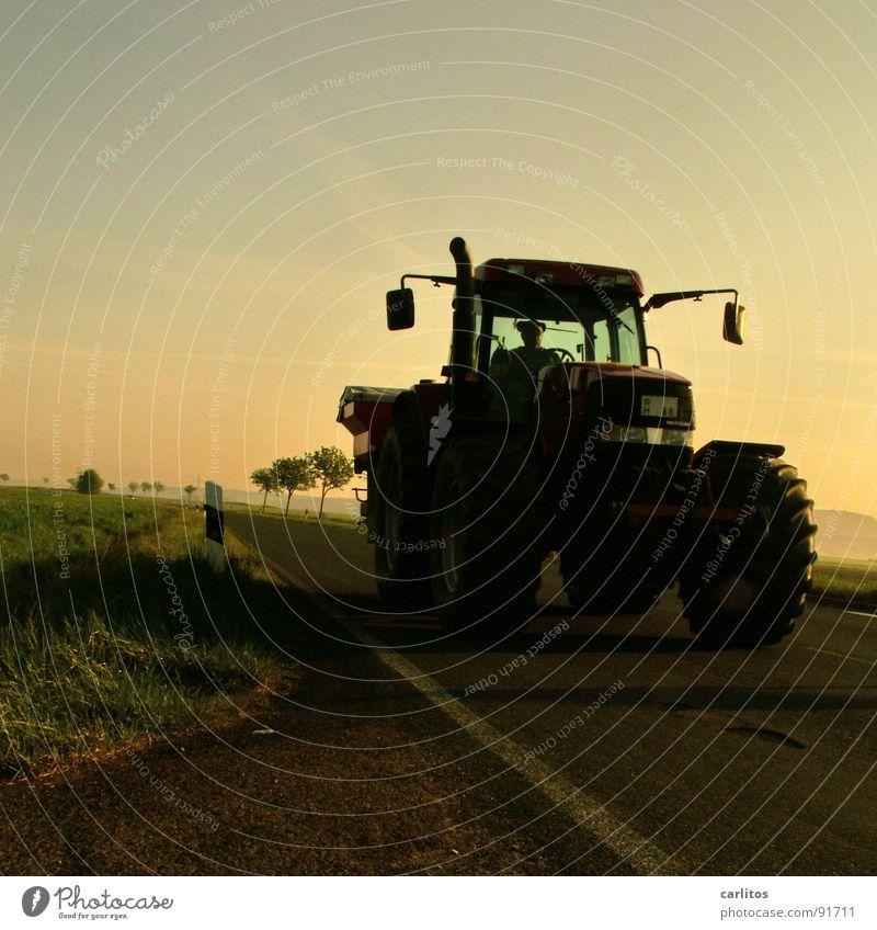 Im Märzen der Bauer ... Allee Landstraße Bundesstraße Morgen Morgennebel Sonnenaufgang Gegenlicht blenden Baum Silhouette Hügel Abstufung Traktor Landwirt