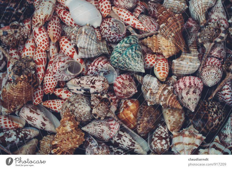 Leerstand Tier Schnecke Muschel viele mehrfarbig Schneckenhaus Muschelschale Sammlung Meerestier Meeresfrüchte Souvenir Farbfoto Detailaufnahme Menschenleer Tag