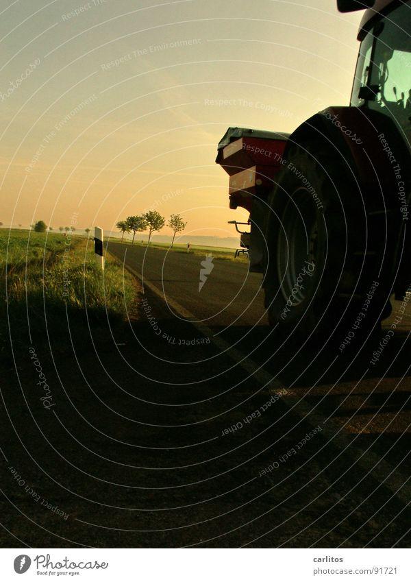 Bauernpower ! Allee Landstraße Bundesstraße Morgen Morgennebel Sonnenaufgang Gegenlicht blenden Baum Silhouette Hügel Abstufung Traktor Landwirt Landwirtschaft