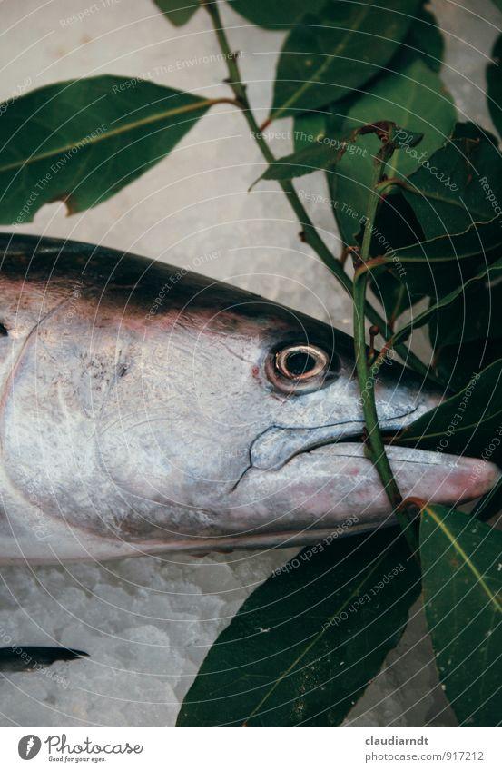 Auf Eis gelegt Lebensmittel Fisch Kräuter & Gewürze Lorbeer Ernährung Italienische Küche Tier Wildtier Totes Tier Tiergesicht Lachs 1 frisch Gesundheit kalt