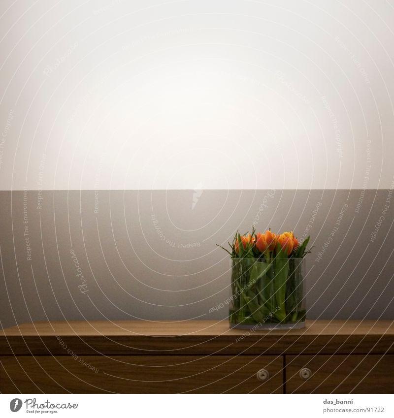 tulpen¹ - Raum ist Luxus grün weiß schön rot Pflanze Sommer Blume Wand Holz grau Stil Frühling Kunst braun Tür Beleuchtung