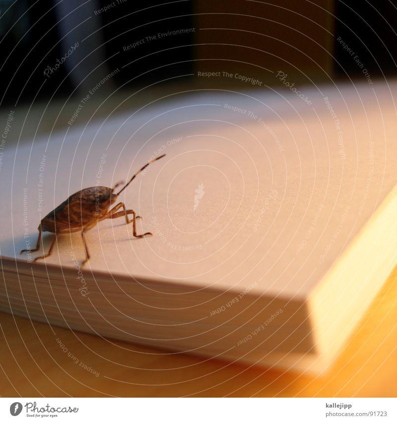 die verwandlung Schiffsbug Ungeheuer Insekt Fühler blind Laus krabbeln kratzen Schädlinge Buch Block Kurzgeschichte Tier Käfer insect Gefühle papierblock sido