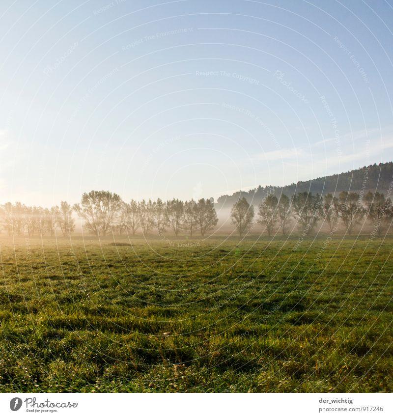 Himmel, Nebel, Gras & Bäume Natur blau grün weiß Baum Erholung Wald Umwelt Berge u. Gebirge Herbst Wiese Deutschland Wetter