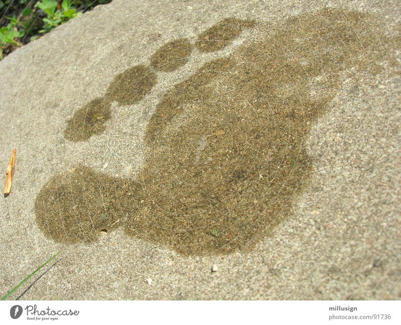 pitsch patsch Fußspur nass feucht Beton Zehen Stein Mineralien Barfuß