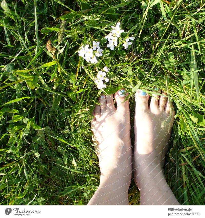 wiesen-boden-ständig Frau blau weiß grün Sonne Sommer Blume Wiese Gras Frühling Blüte Beine Fuß Haut frisch stehen