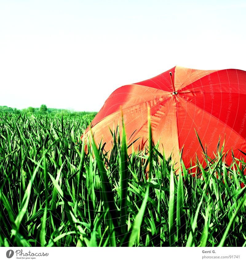 reingelegt charmant Sonnenschirm Schutzausrüstung Regenschirm rot Sommer Feld Kornfeld frisch mehrfarbig grün-rot Landwirtschaft Wind Halm Bewegung abgeschirmt