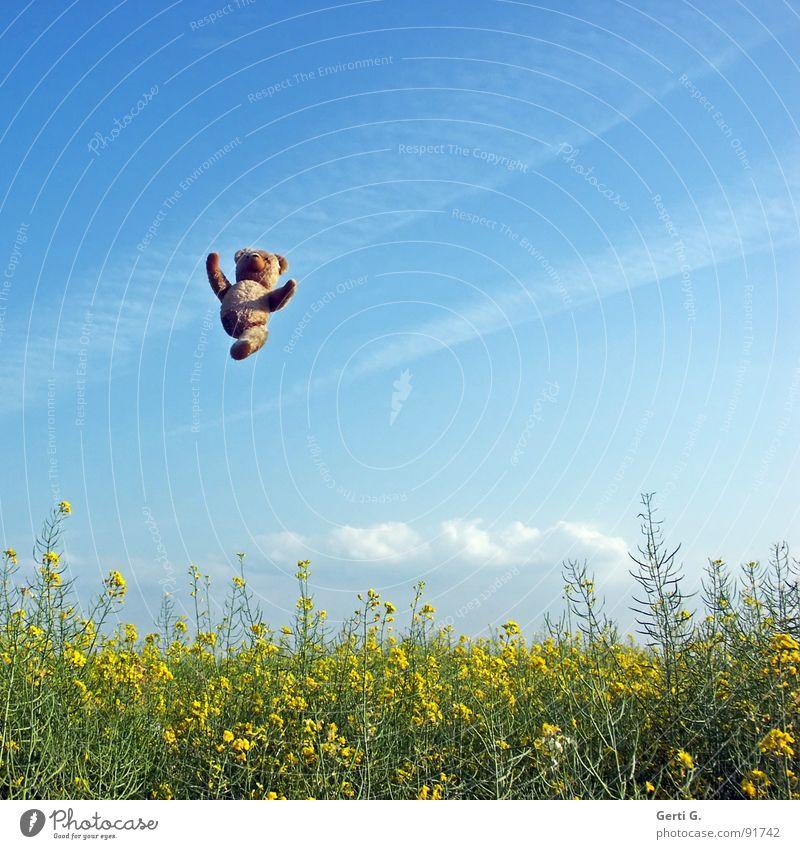 TeddyWeitWurf Himmel Hand blau Freude Sommer Wolken gelb springen Glück Landschaft braun lustig Arme fliegen hoch Niveau
