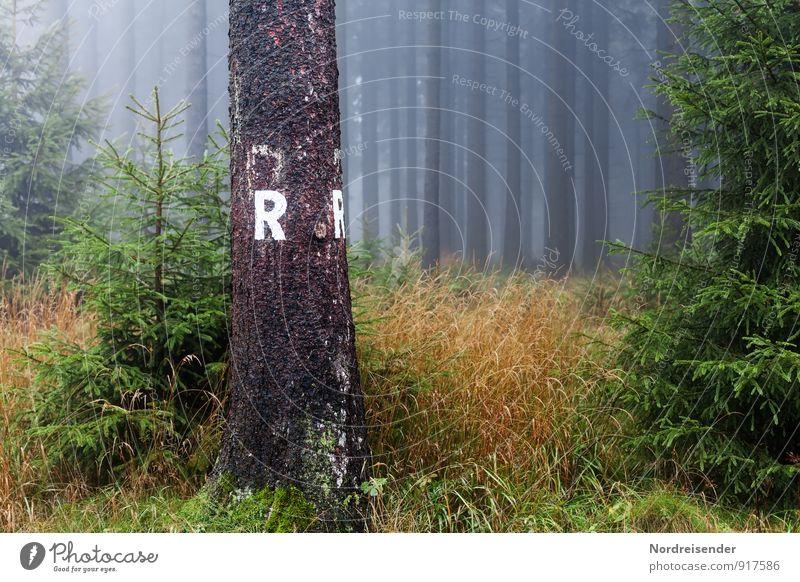 R Ferien & Urlaub & Reisen Tourismus Ausflug wandern Natur Landschaft Pflanze Herbst Klima Wetter schlechtes Wetter Nebel Baum Gras Wald Wege & Pfade Zeichen