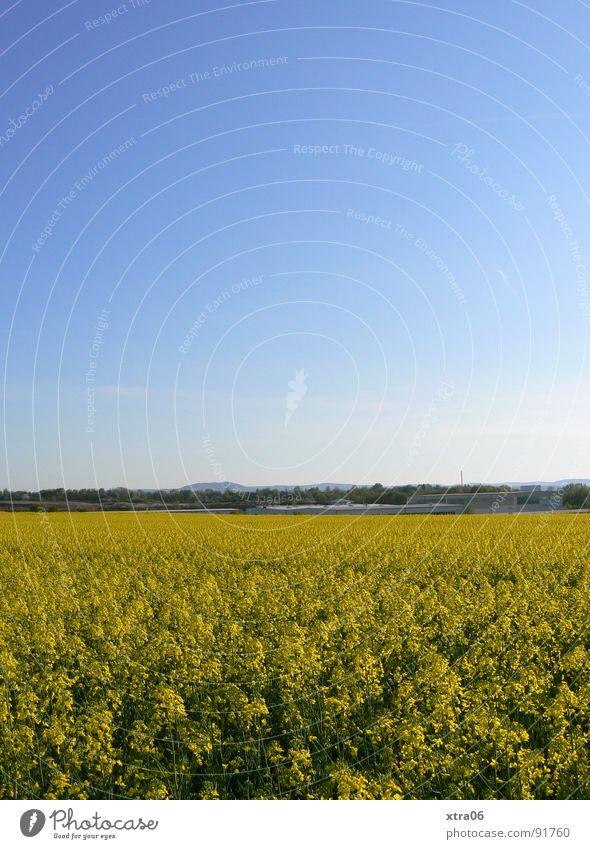 jaja, auch das ist ein rapsfeld ist ein rapsfeld... Himmel blau Pflanze Sommer gelb Ferne Blüte Frühling Wärme Landschaft Feld Umwelt groß Horizont