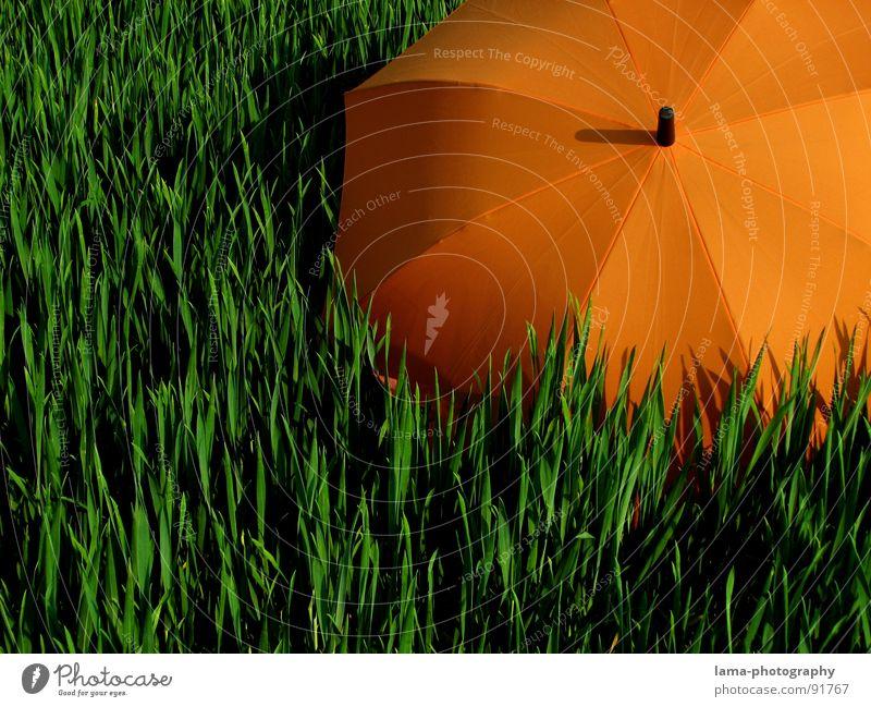 The Orange Sun Cloppenburg Regenschirm Sonnenschirm Unwetter Wolken Gras Halm Wiese Sommer Feld grün Frühling ruhig Einsamkeit Erholung Sonnenbad vergessen