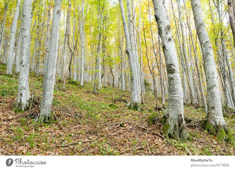 Wald Abenteuer Natur Landschaft Pflanze Herbst Wetter Nebel Regen Baum Blatt Einsamkeit Nicht-urbane Szene Mysterium Japanisches Herbstlaub Buche Märchen