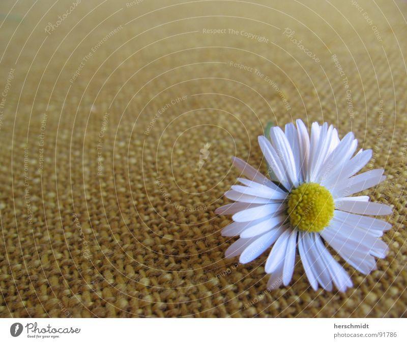 daisy Gänseblümchen Blume Pflanze weiß gelb grün Stoff Ferne Muster Einsamkeit beruhigend Daisy Sitzgelegenheit schauckel hollywood-schaukel liegen