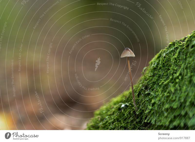 Am Berg... Natur Pflanze Herbst Moos Pilz Pilzhut Wald Wachstum klein wild braun grün Optimismus Gelassenheit geduldig ruhig Zufriedenheit Idylle Kraft zart