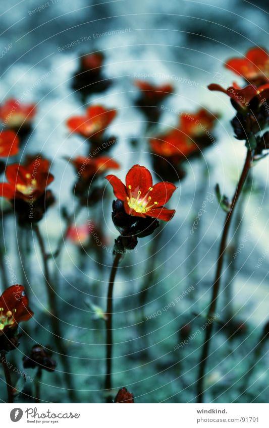 I dreamt tonight Blume grün blau rot kalt träumen zart