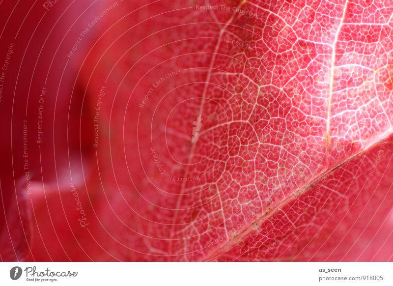 Netzwerk Natur Pflanze schön Farbe rot Blatt ruhig Umwelt Herbst natürlich leuchten Verkehr Klima ästhetisch Spitze Vergänglichkeit