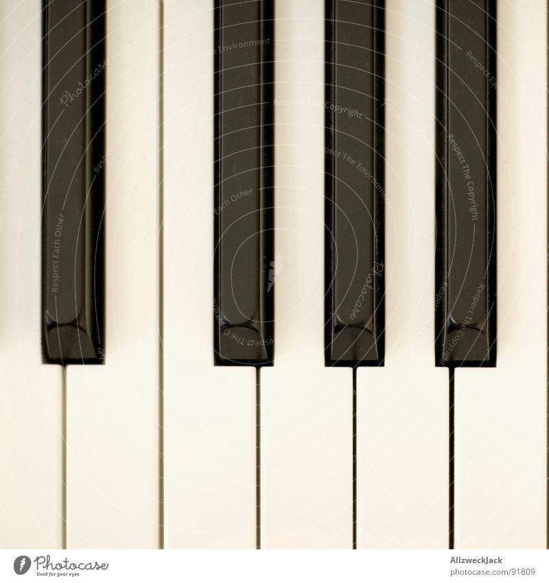 Kla4 weiß schwarz Spielen Musik Zufriedenheit Kunst Flügel berühren Konzert Dynamik Klavier Musiknoten Kunsthandwerk Musikinstrument Tier hören
