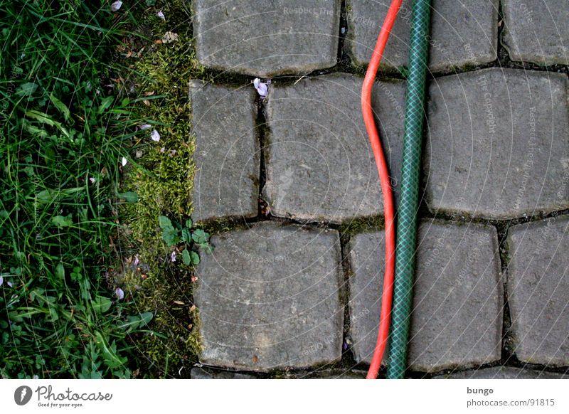 Textur Wiese Gras Garten Stein Kommunizieren Kabel Bodenbelag Löwenzahn Teilung Kopfsteinpflaster Furche Schlauch verbinden graphisch Spalte biegen
