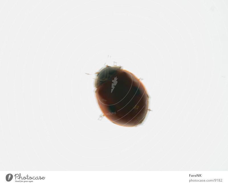 Bug Insekt Käfer Schiffsbug