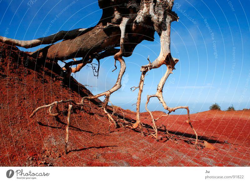 _ Trockene Erde rot Baum streben Gomera Kanaren Ferien & Urlaub & Reisen Suche Dürre Wachstum Wüste Sand Wasser Durst blau Wurzel Tod Natur Ausstrecken