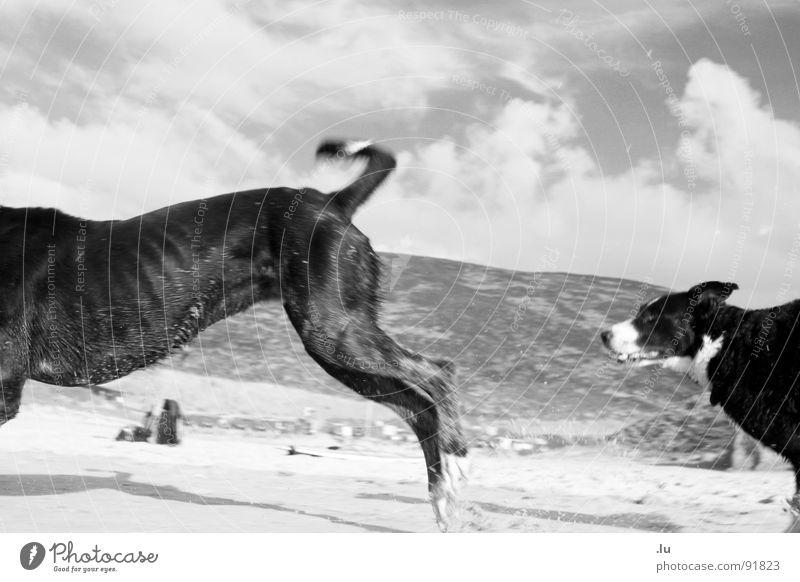 _ Das Ende vorm Anfang Spielen Bewegung Hund Kraft laufen Beginn Kraft rennen Ende Jagd Dynamik Säugetier Tier verfolgen Verfolgung