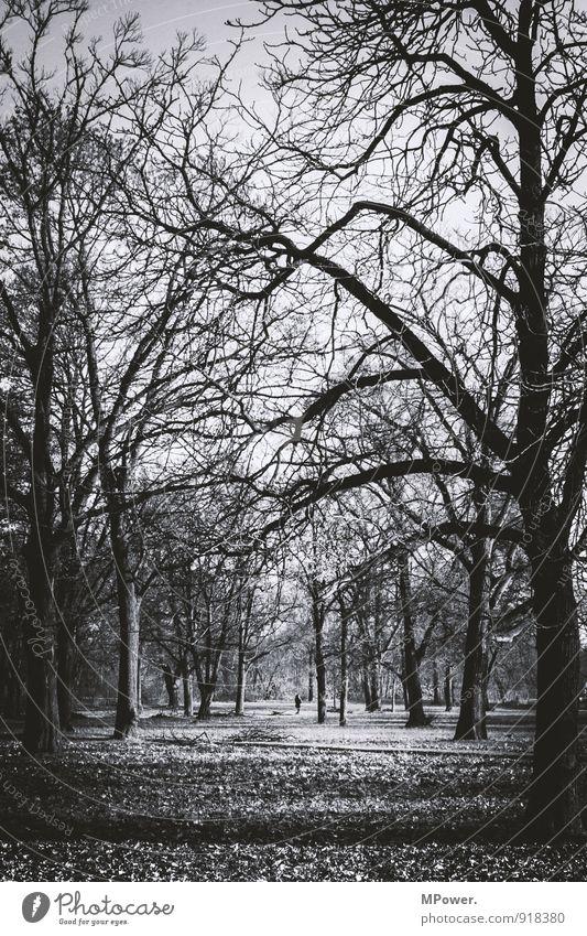 herbst Umwelt Natur Herbst Pflanze Baum Park Wald stachelig trist trocken viele Wandel & Veränderung Erde Blatt Ast kahl spukhaft grau Schwarzweißfoto
