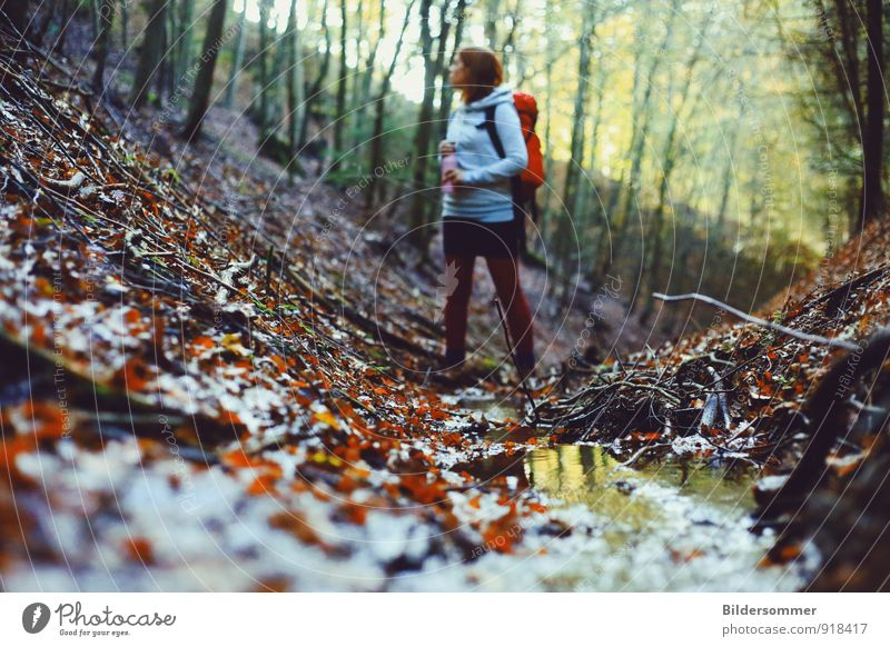 . Ausflug wandern feminin Junge Frau Jugendliche Erwachsene 1 Mensch 18-30 Jahre Natur Landschaft Pflanze Wasser Herbst Baum Blatt Wald Bach Fluss Rucksack