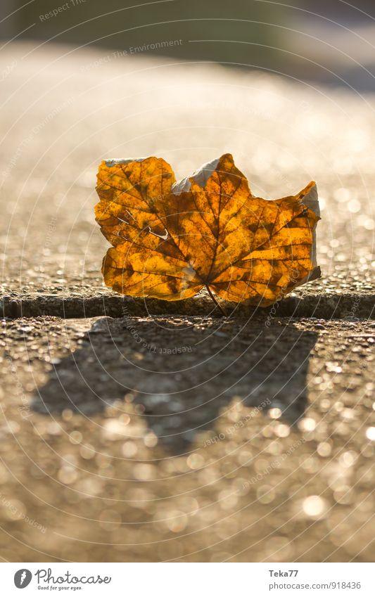 Herbstblatt Umwelt Natur Landschaft Sonne Klima Pflanze Baum Blatt Gefühle Zukunftsangst Respekt Herbstlaub herbstlich Ahornblatt Farbfoto Nahaufnahme