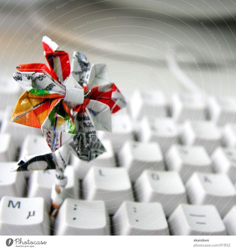 euphorbia duplerima weiß Blume Freude Ernährung Geschenk Kommunizieren Kabel Buchstaben Werbung Tastatur berühren lecker Falte Süßwaren Kreativität Wachsamkeit